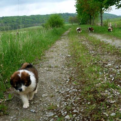 Die 6. Woche   Der erste Spaziergang...