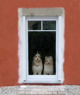 ...die Hunde erobern alle Zimmer.