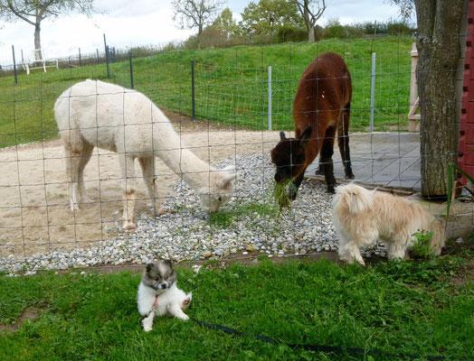 ...nur durch den Zaun lassen wir sie nicht, sie ist schon noch sehr klein.