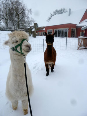 Ich will auch wieder rein, lieber Heu als Schnee, Shamu.