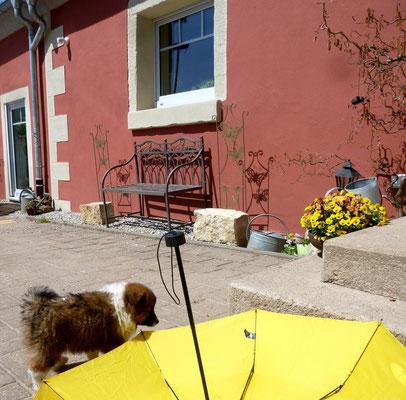 Ein Regenschirm - macht mir doch nix aus.