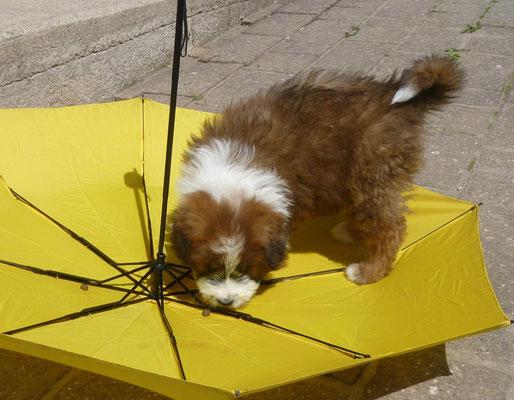 Auch ein Regenschirm kann ihm nix annhaben...