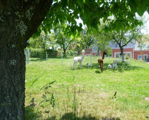 ...sehr gechillt in unserem Garten mit den Tieren verbracht.
