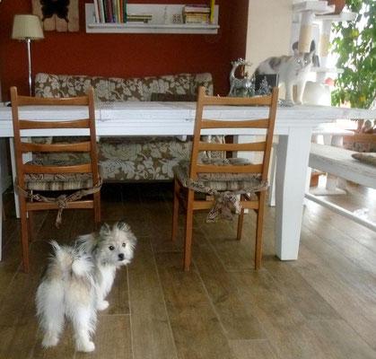 ...Tisch ist tabu für Hund, das weiß die Katze :-).