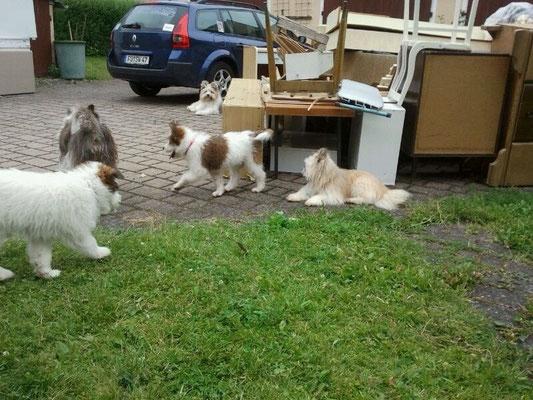 Sperrmüllaktion - ein Abenteuerspielplatz für die Hunde.