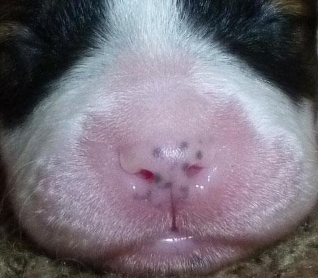 Hier sieht man schön, wie die Nase langsam pigmentiert.