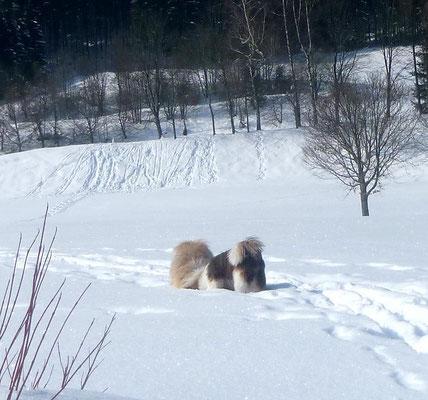 ...und schnüren durch den Schnee.