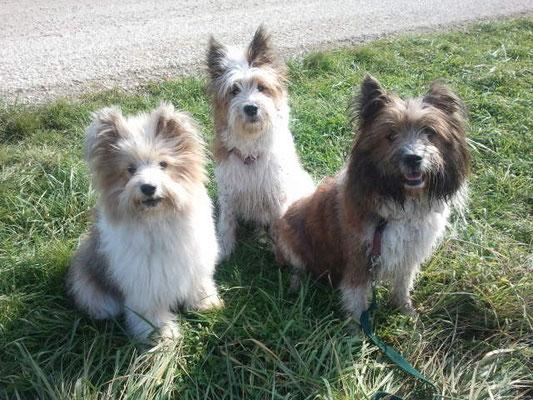 Samba mit ihrer Halbschwester Pookie und Mama Candy.