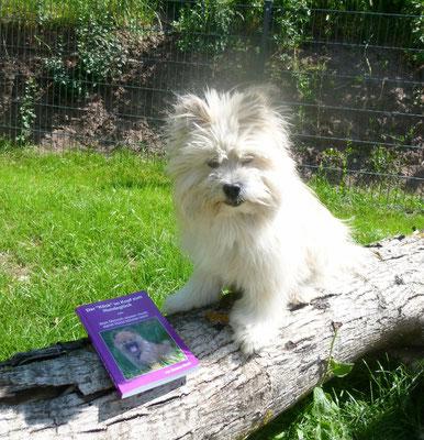 """Endlich - es war echt schon ganz schön eng: Der Nachdruck von der 2. Auflage von Der """"Klick"""" im Kopf zum Hundeglück ist da!!!"""