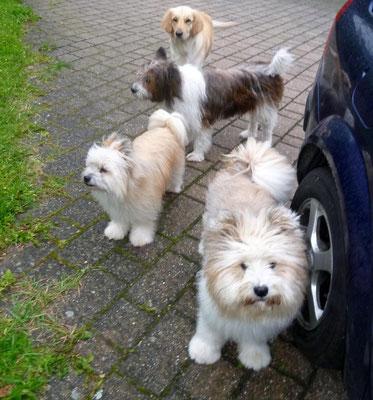 Wir packen mal wieder unsere Autos voll mit Hunden...