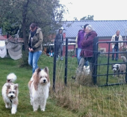 Gesellige Familienhunde
