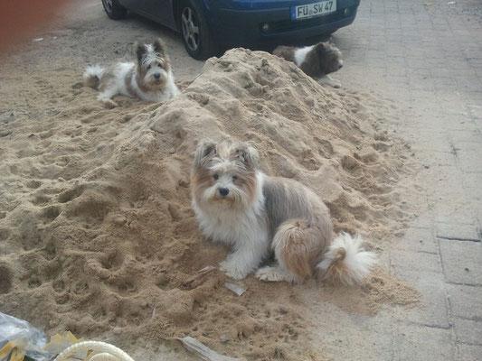 ...zur Zeit sogar einen Sandstrand...