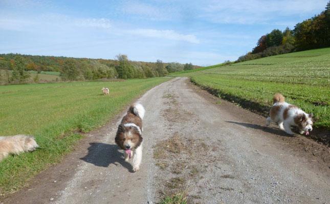Spaziergänge und wilde Rennspiele
