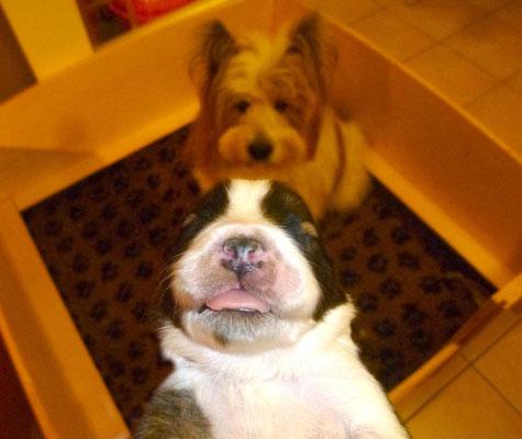 Ja Pookie, du bekommst jetzt alle wieder ins saubere neue Bettchen.