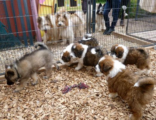 Jahaaa, die R-chen-Welpen bekommen ihren ersten Hunde-Besuch.