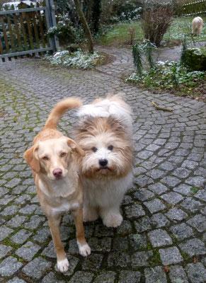 Auch draußen haben sich Samba und Muffin prima verstanden...