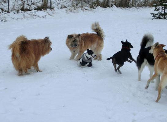 ...treffen. Das klappt so hervorragend, da alle Hunde die gleiche Erziehung und Sozialisierung genossen haben.