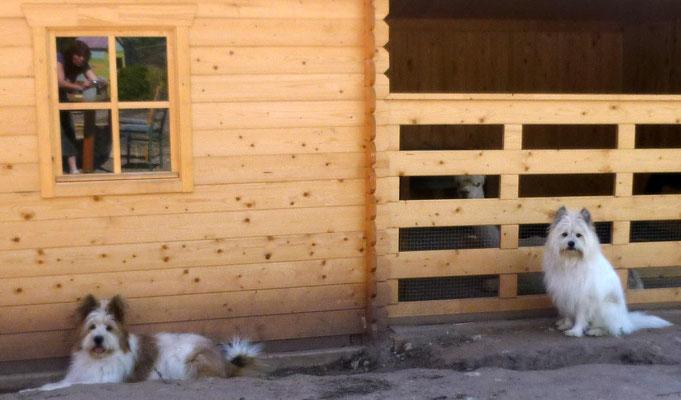 ...und smalltalken auch mit den Alpakas.