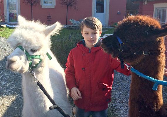 Die Alpakas sind sehr neugierig und fassen schnell Vertrauen.