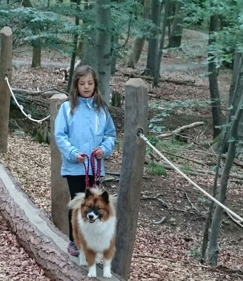 Diabetikerhund Elo