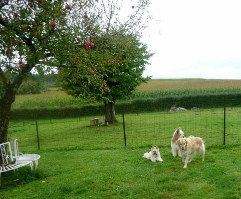 ...jetzt fügt er sich besser in den Garten ein - finden auch Lolli, Pookie und Kaleigh.