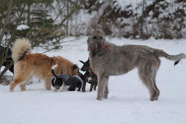 Natürlich gab es wieder das wunderbare Freispiel, bei dem sich viele andersartige, große und kleine, alte und junge Hunde...