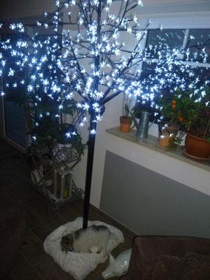 """Milou schläft unter unserem """"Weihnachtsbaum""""."""