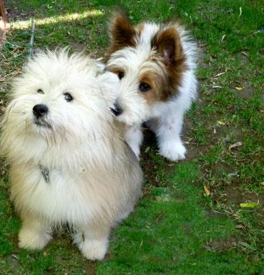 Maggie weiß noch nicht, dass Pookie bald viel größer als sie sein wird,.
