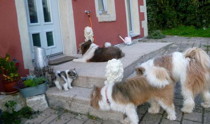 ...und Familienhunde teilen nun mal gern.
