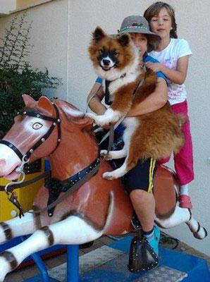 Familienhund Elo auch als Servicehund beliebt