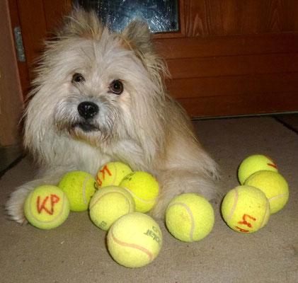 ...nur bei Besuch bin ich hartnäckiger, ich weiß nämlich, das ich so gut wie jeden rumkrieg, dass er mit mir Ball spielt - guter Tipp: Dabei  aber niiieeeemals bellen!