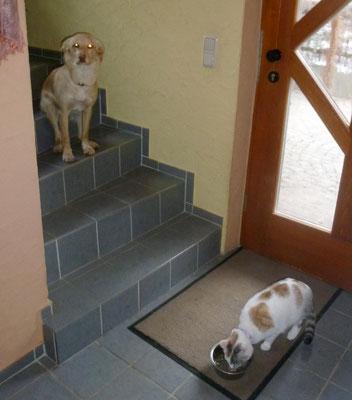 ...und ist entsetzt über die Dreistigkeit unserer Katze Shisha.