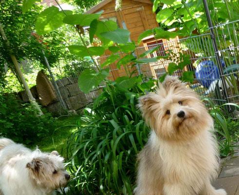 Auch Roxy und Samba sind gespannt - wer kommt da wohl?