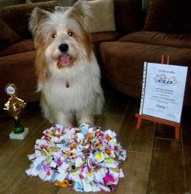 Ouh, Pookie hat ein Päckchen bekommen. Sie hat den 1. Platz gemacht beim letzten Herbst-Elo-Treffen bei der Wahl des schönsten Groß-Elo-Rauhaar. Ein Pokal, eine Urkunde und ein Schnüffeltuch hat sie bekommen!