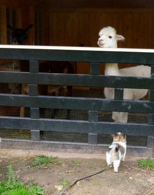 Hm - mal schauen, wielange es dauert, bis sie Freunde werden.