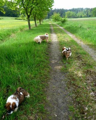 ...die Mädels gehen auf ihren ersten Spaziergang.