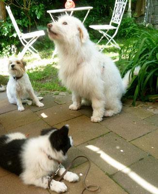 Ob Dipsy schon weiß, dass bald die kleine Pina-Pepina bei ihnen einzieht?