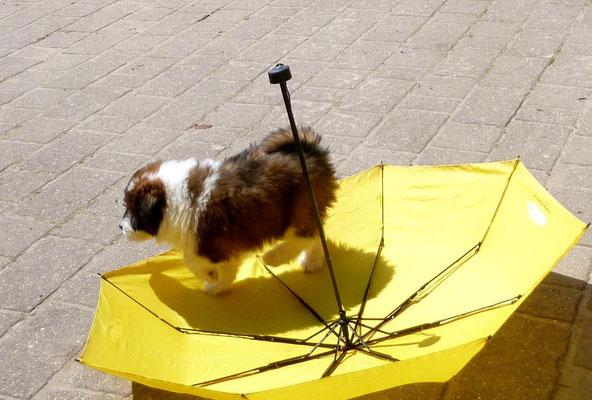 Ein Regenschirm in dieser Hitze - so ein Quatsch.