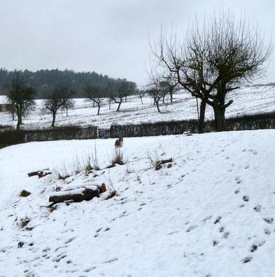 Endlich ein wenig Schnee...