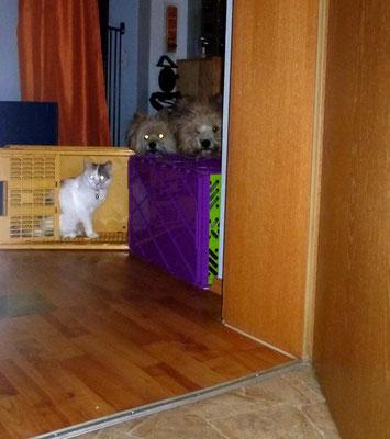 Die Spione sind immer sehr neugierig.