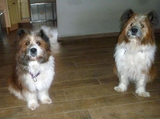 Candys Tochter und O-Sambas Schwester Oralie-Lilly ist zu Besuch...