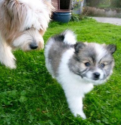 ...ein kleiner Klein-Elo-Patenhund ist auch was schönes :-).