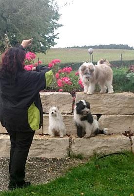 Familienhund groß und klein