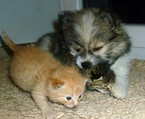 Elo-Welpe und Katzenwelpen