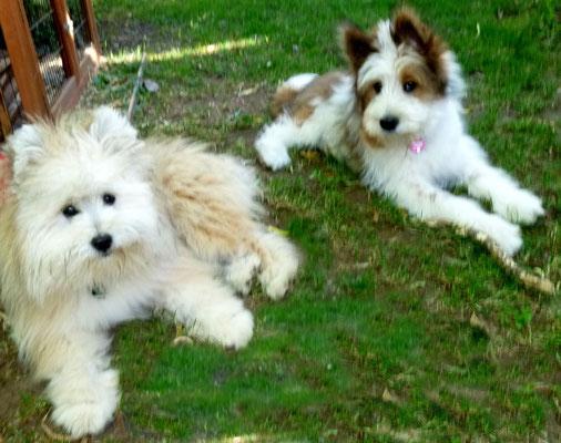 Dann ist Maggie da - sie kommt auch mit allen unseren Hunden gut aus.