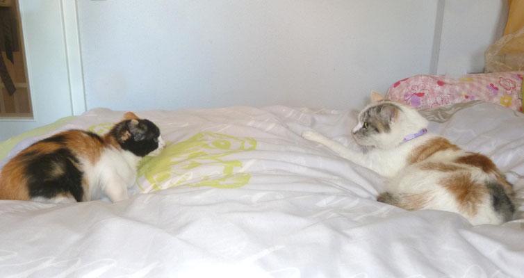 Annikas Katze Luna ist zum erste Mal da - Shisha war not amused!