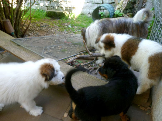 Sehr schön war das Treffen, die Hunde sind fast gleich alt.