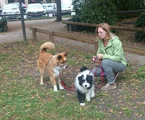 mittelgroßer Familienhund