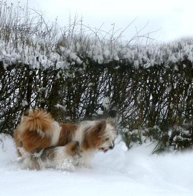 Pookie im Schnee.