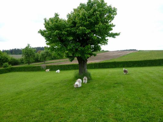 "...nach Oberdombach bei Ansbach, unser baldiges ""Eloland""."